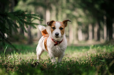 How often should a dog be trained for the best results?