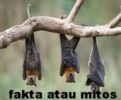 https://faktaataumitosyo.blogspot.com/2018/05/fakta-atau-mitos-hewan-kelelawar-tidak-dapat-melihat.html