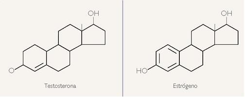 Hormonas Composición Química Y Transporte Biología Escolar
