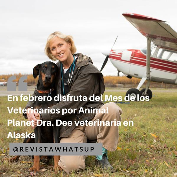 Dr-Dee-veterinaria