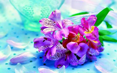 Bunga Anggrek Cantik