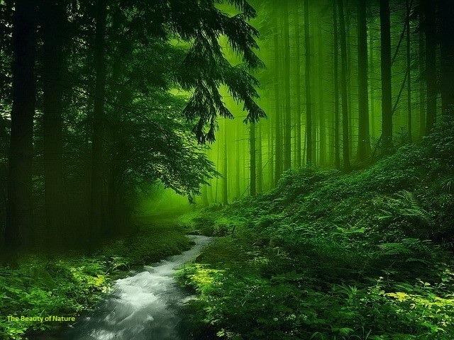 Keindahan Kehijauan Alam