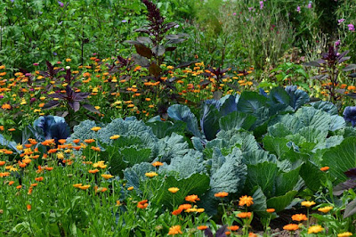 Rows of Healthy Vegetables Growing near Flowers