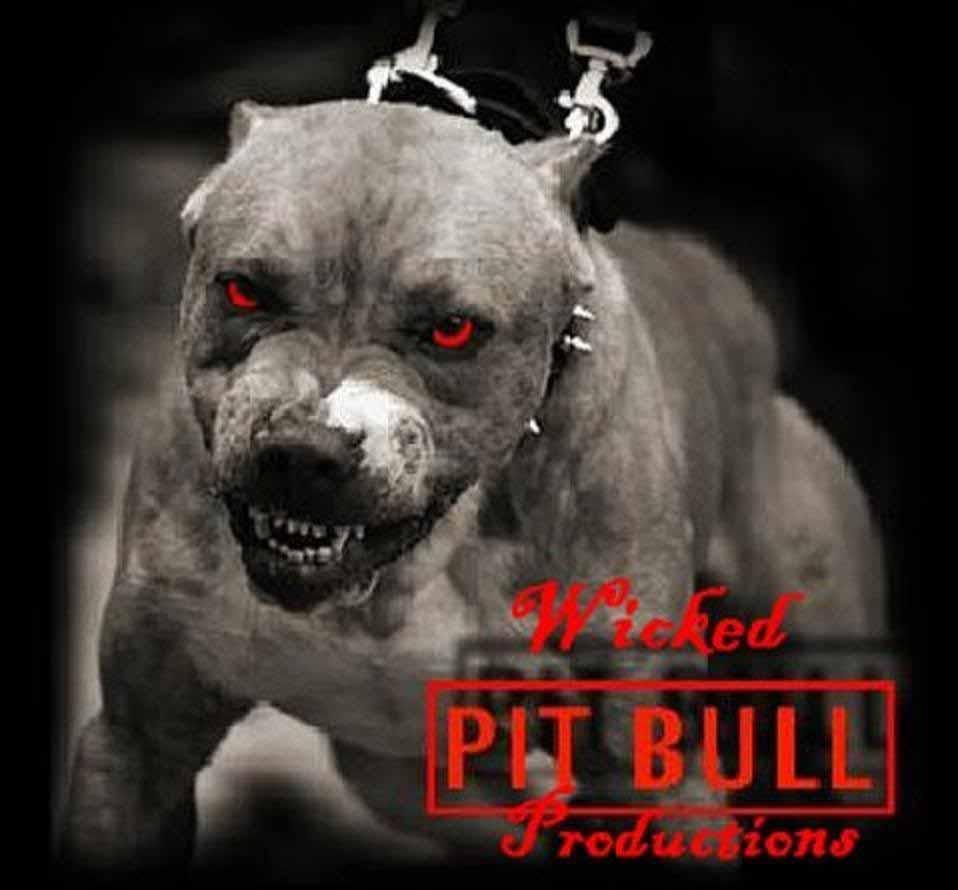 Pitbull+Dog+Wallpapers1