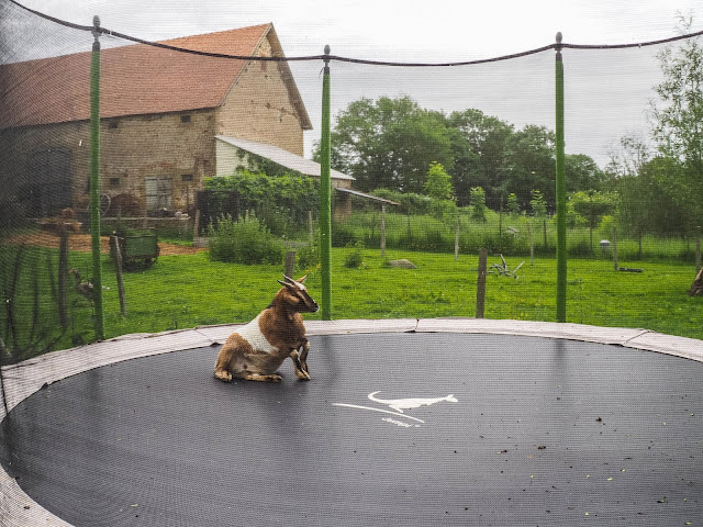 geit op trampoline