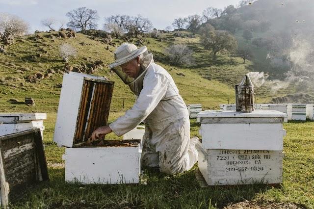 Η μελισσοκομία ως επάγγελμα: Η Ομιλία επαγγελματία μελισσοκόμου