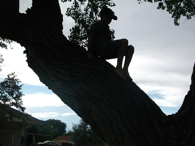 A Little Boy In A Tree, Living From Glory To Glory Blog