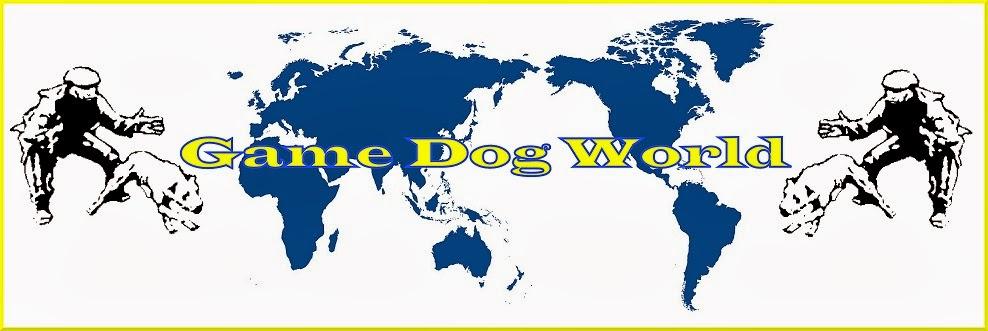 Game Dog World: SPORTING DOG PIT BULL FORUM INTERNATIONAL
