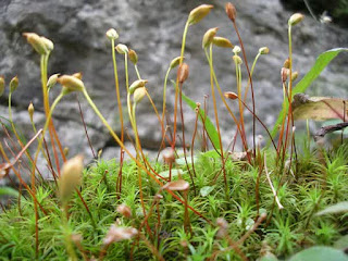 characteristics of mosses, for example, classification, benefits