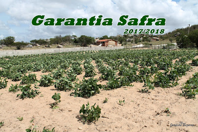 Resultado de imagem para garantia safra 2017/2018 PERNAMBUCO