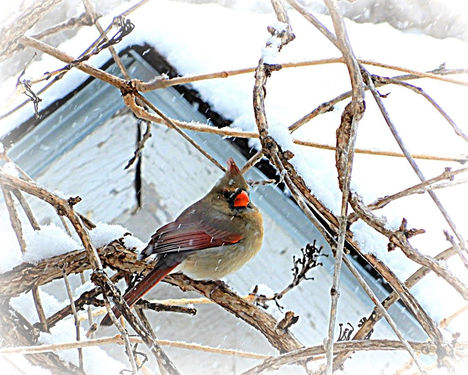 Winter Visitor