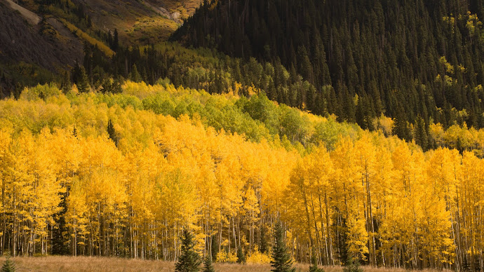 Wallpaper: Autumn Landscape