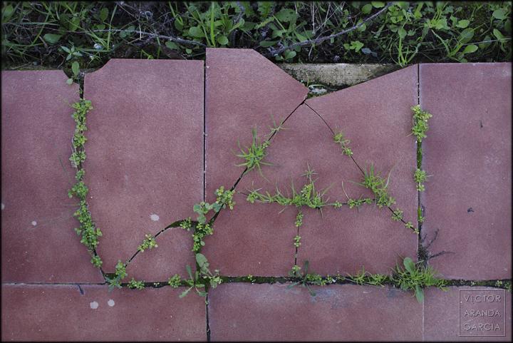 fotografia,naturaleza_urbana,fuente_alamo,plantas,suelo,baldosa,la