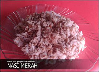 5 Manfaat Nasi BERAS MERAH bagi KESEHATAN