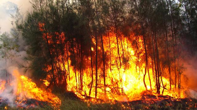 Medidas preventivas para evitar un incendio forestal