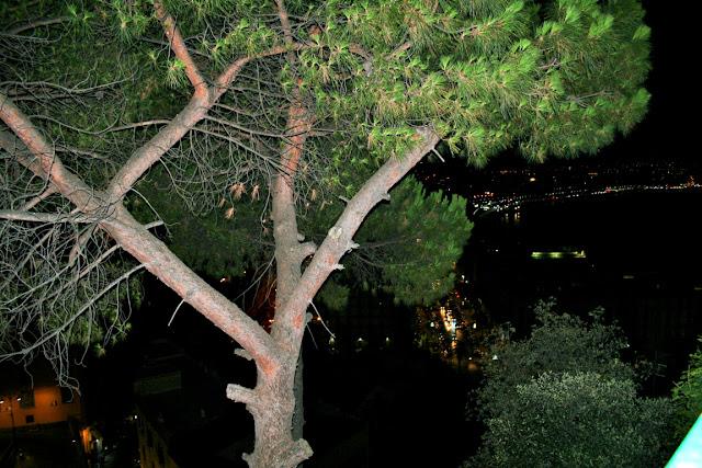 albero, notte, posillipo