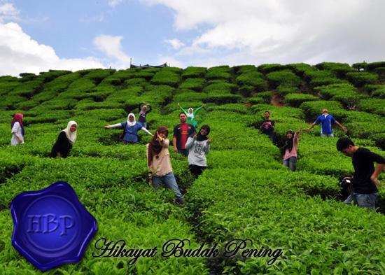 Destinasi #VMY2014 Pilihan Blogger Malaysia - Cameron Highlands