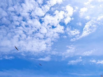 Blue sky in June: Yuigahama-beach