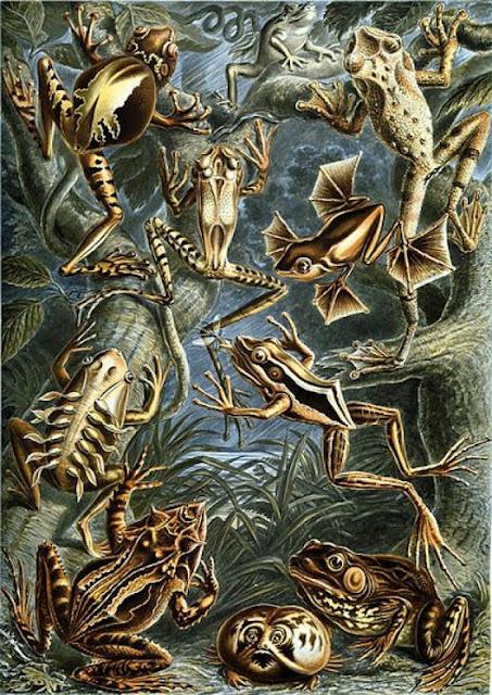 Ernst Haeckel - Γερμανός βιολόγος και καλλιτέχνης 4