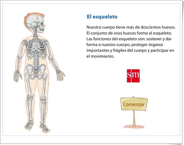 """""""El esqueleto"""" (Presentación de Ciencias Naturales de Primaria)"""
