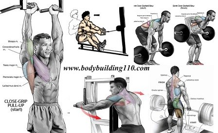 Best Upper back exercise movements workouts