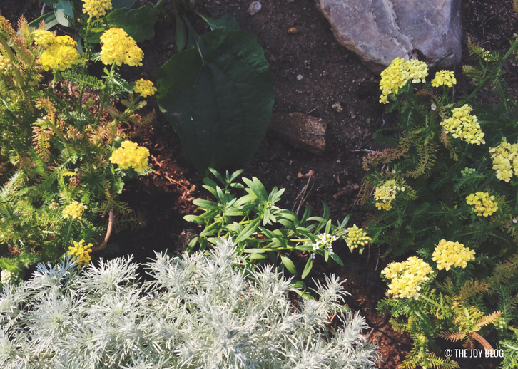 Yarrow & Wormwood // A Bee Friendly Flower Bed - Update | www.thejoyblog.net