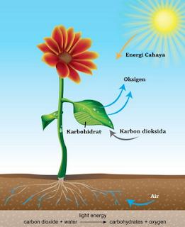 Pengertian dan Proses Terjadinya Fotosintesis Pada Tumbuhan