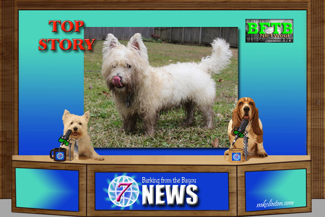 BFTB NETWoof News set with Westie and Basset