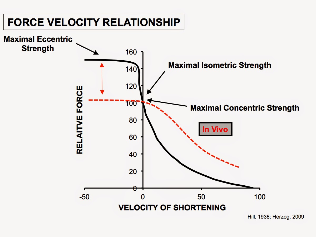 McMillanSpeed   : a coaches' guide to strength development