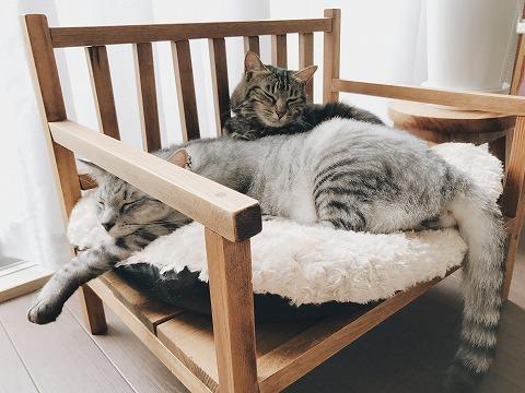 ベンチに伸びて寝てるサバトラ猫と、その尻で後ろに押しやられてるキジトラ猫