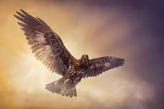 Sonhar com imagem de águia