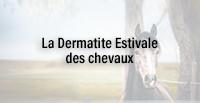 La Dermatite Estivale des chevaux