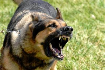 Most-Dangerous-Dog-Breeds in the world