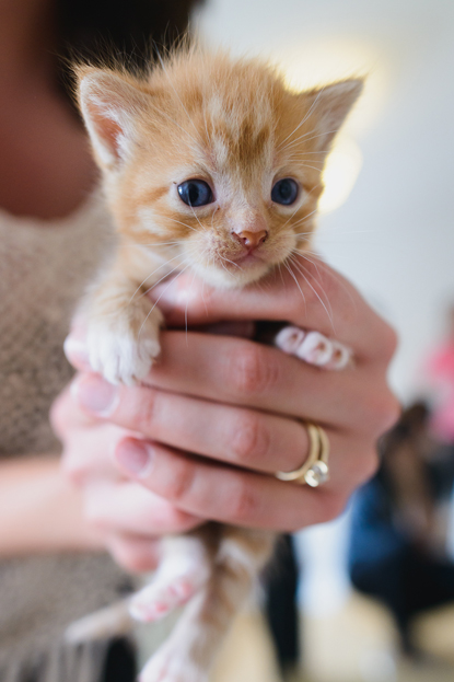 ginger kitten in human's hands