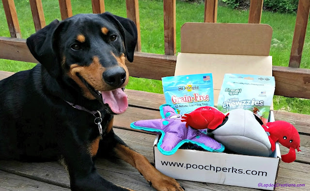 doberman mix rescue dog pooch perks box