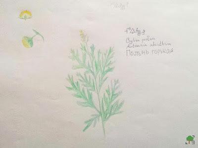 rysunek, zielnik, rośliny, absynt, zioła