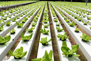 Organic Hydroponic Gardening - Onicgarden.com