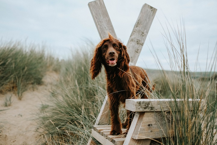 Dog Holiday to Saunton Beach Villas