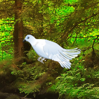 Wowescape White Pigeon Forest Escape
