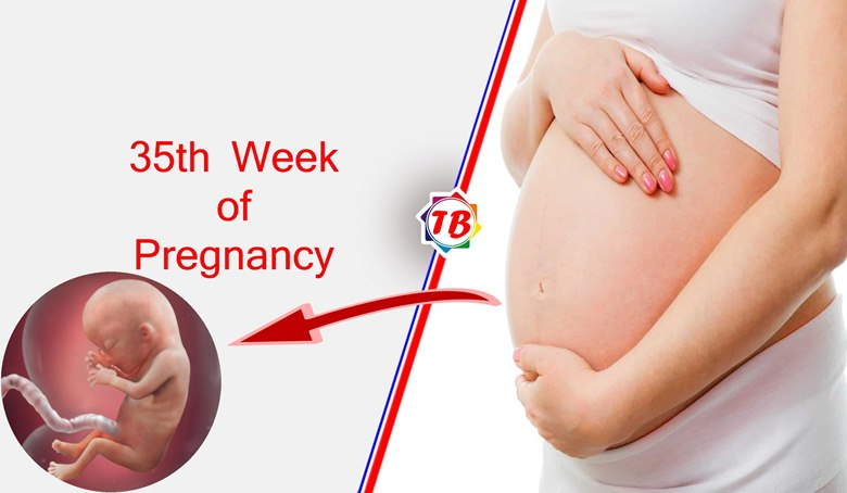 35th Week of Pregnancy