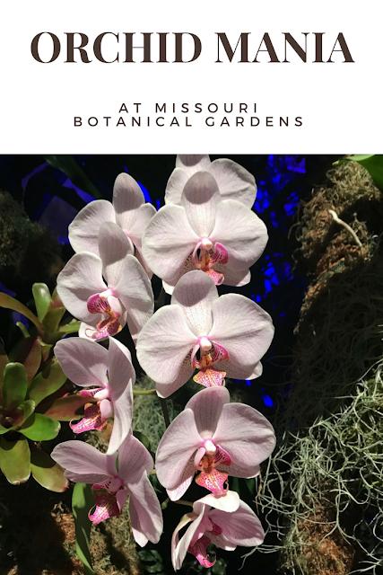orchids at Missouri Botanical Gardens
