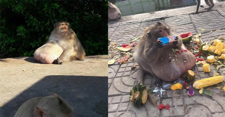 Download 80+ Gambar Monyet 7 Paling Baru Gratis