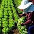 การทำเกษตรธาตุ 4