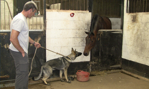 Paul Glennon with Charlie meeting a horse in his stable. The horses head is down to meeting the dogs