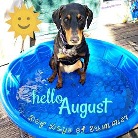 rescue dog doberman pool summer mixed breed