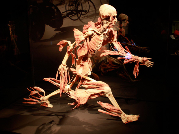 Historical Reminiscents Exhibit Reflection Body Worlds Vital