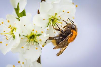 Prelucrarea mierii, de la descăpăcire la filtrare
