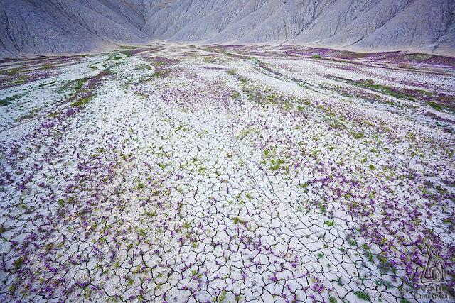 Láttál már kivirágzott sivatagot? Itt az alkalom!