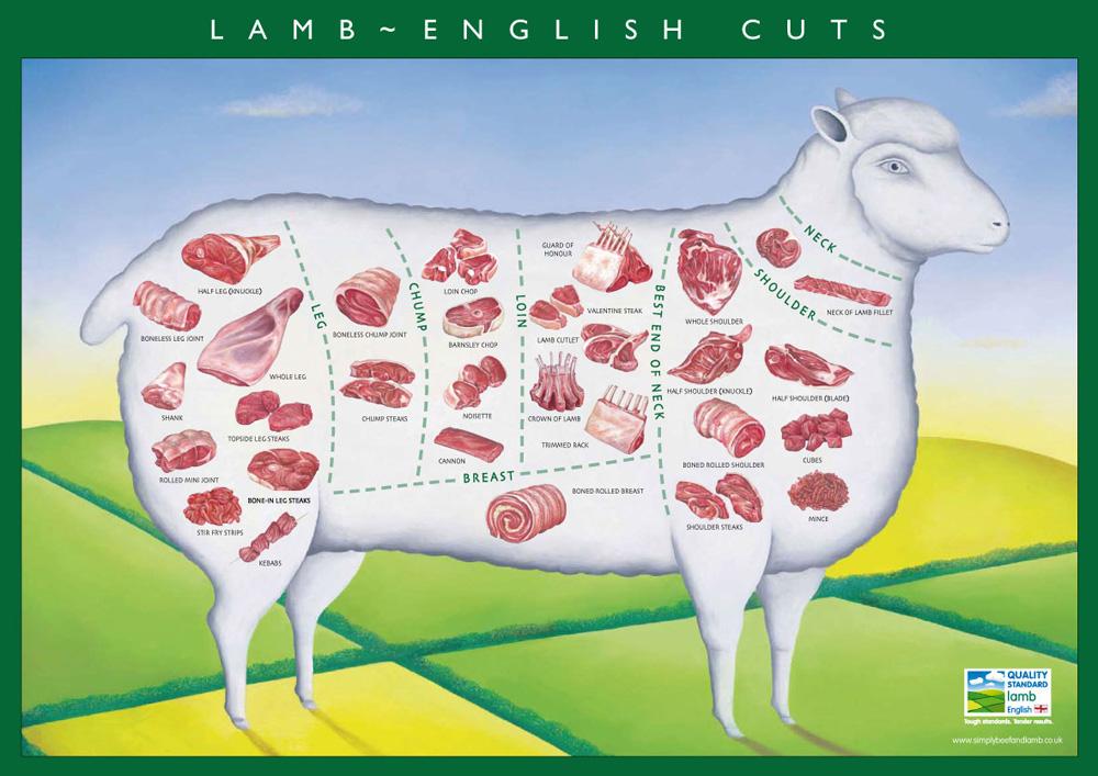 easy cooking: lamb cuts lamb meat diagram cow meat diagram