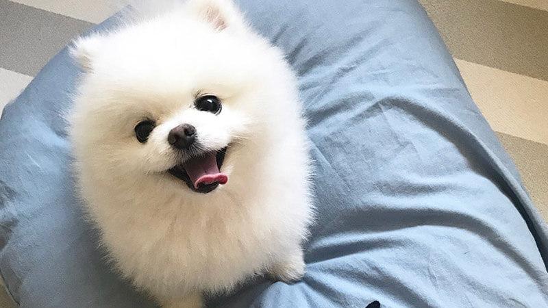Cara Merawat Anjing Peliharaan Agar Selalu Sehat